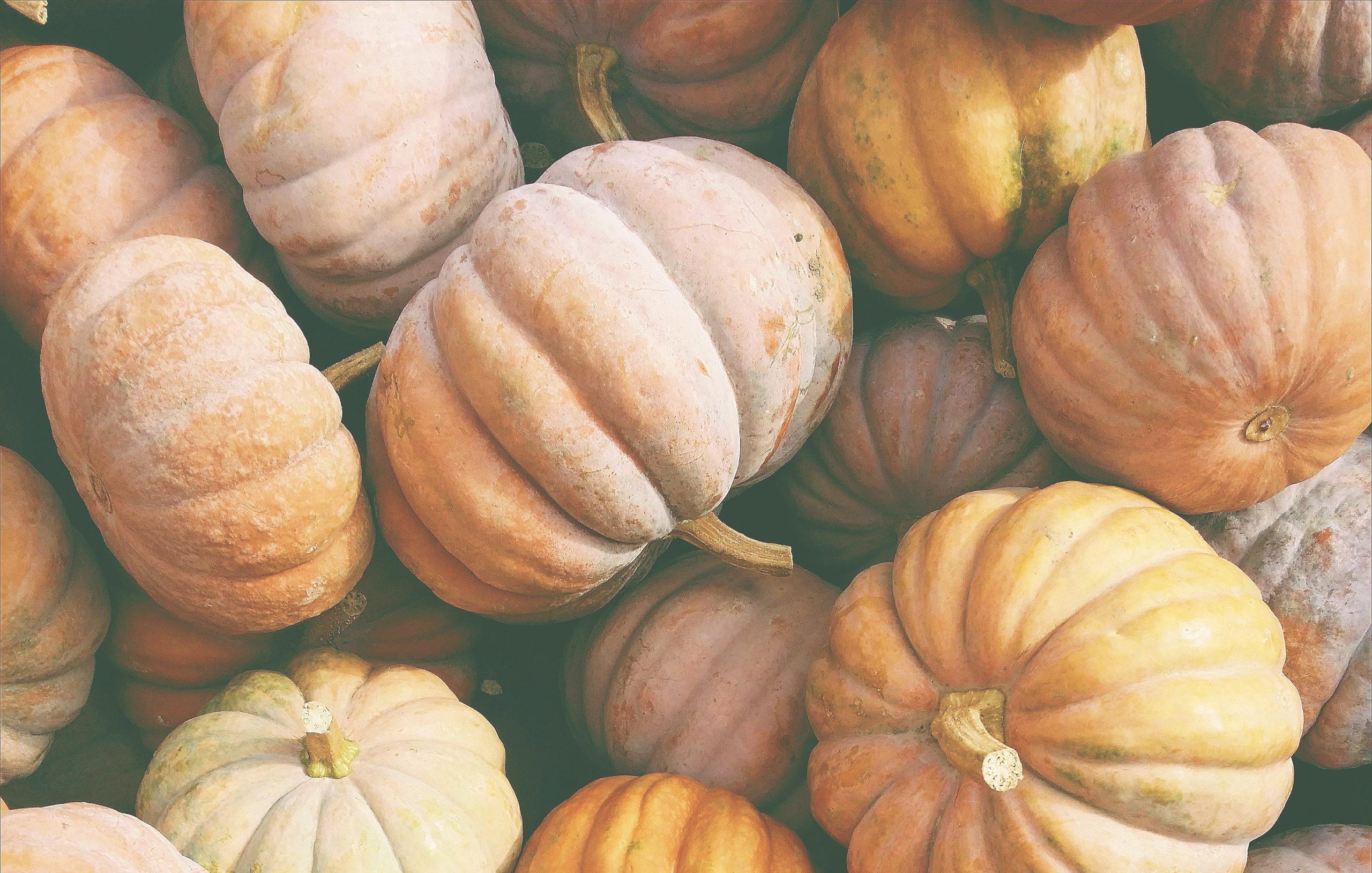 PumpkinsHeader